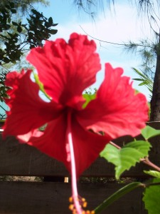 Incredibly beautiful local flora, grows best over the environmentally-designed septic system!