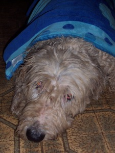The only one who doesn't seem to relish all this rain--and the rumbling thunder--is Eddie the Sheepdog!