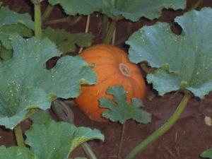 then orange!