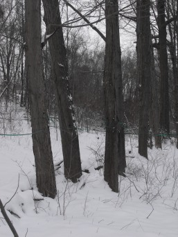 snow-day-march-2-019
