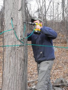 tapping-trees-002