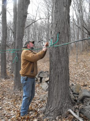 tapping-trees-0051