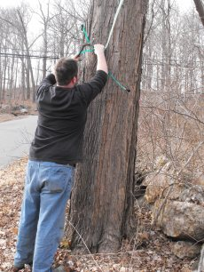 tapping-trees-0071