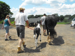 """The fam"" walks Annabelle and her baby out to the pasture."